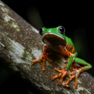 Eine Nahaufnahme eines tropischen Frosches.
