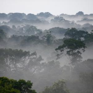 Ein Blick über den nebelverhangenen Regenwald Perus.